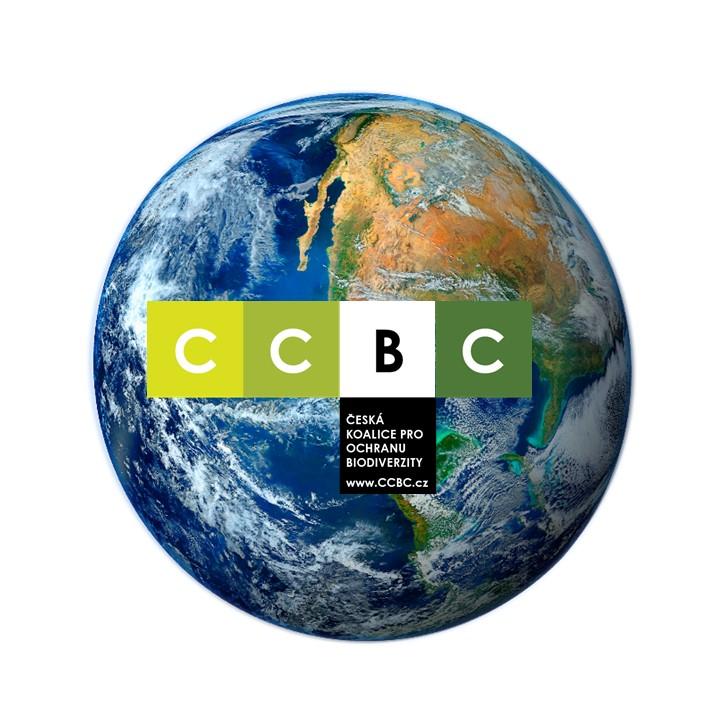 CCBC Portfolio